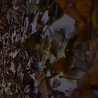 846 foglie
