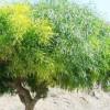 albero portogallo